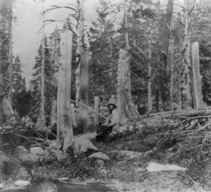 Stumps of trees cut by the Donner Party in Summit Valley, Placer County