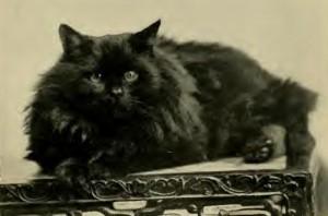 cat familiar