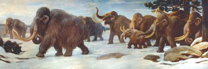Wooly mammoths near the Somme River, AMNH mural; Charles R. Knight