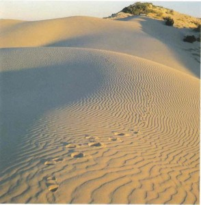 Death Among the Dunes: Desert Monsters (The Savage Sands)