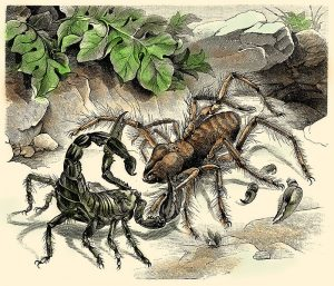 Giant Scorpion and Giant Camel Spider, Fight!