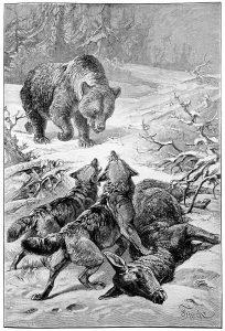 Midgard Icons: The King of Bears